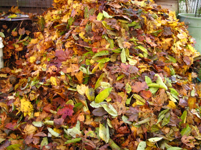 raking leaves | Audrey Driscoll's Blog