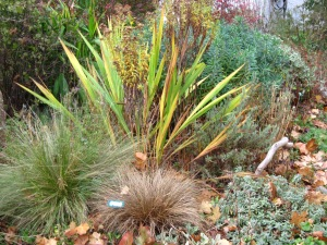 Drought Tolerant Perennials and Grasses