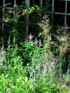 Fireweed (Epilobium) with bloom stalks of Stipa gigantea
