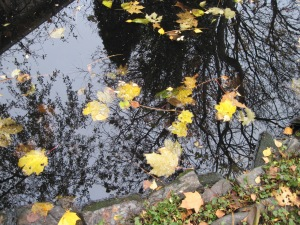 Leaves and reflections.