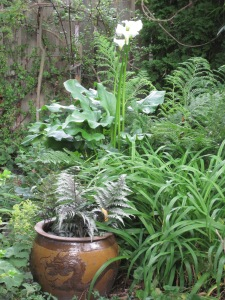 """The """"jungle"""" by the pond (in June)"""