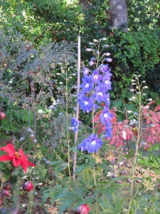 Delphinium and Dahlia