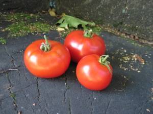 Perfect Tomatoes!