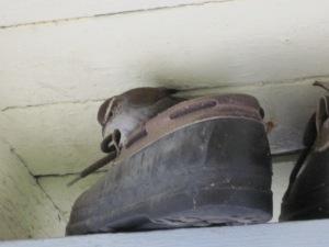 Shoe Bird 1