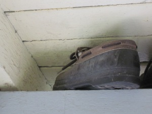 Bewick's wren on nest in shoe
