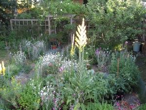 The back garden in full bloom