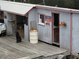 Floating post office at Kildonan (and dog)