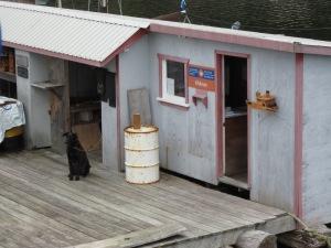 Floating post office at Kildonan (and dog)