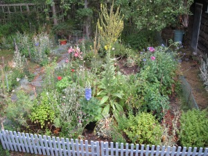 The Ex-Vegetable Patch today