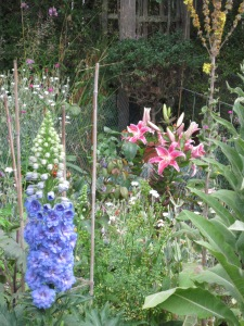 """Potted Delphinium and potted """"Stargazer"""" lily"""