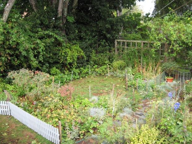 Back Garden, September 2015