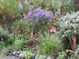 "Purple aster, pink nerines and ornamental grass ""Little Bunny"""