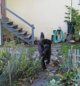 More playing in the garden