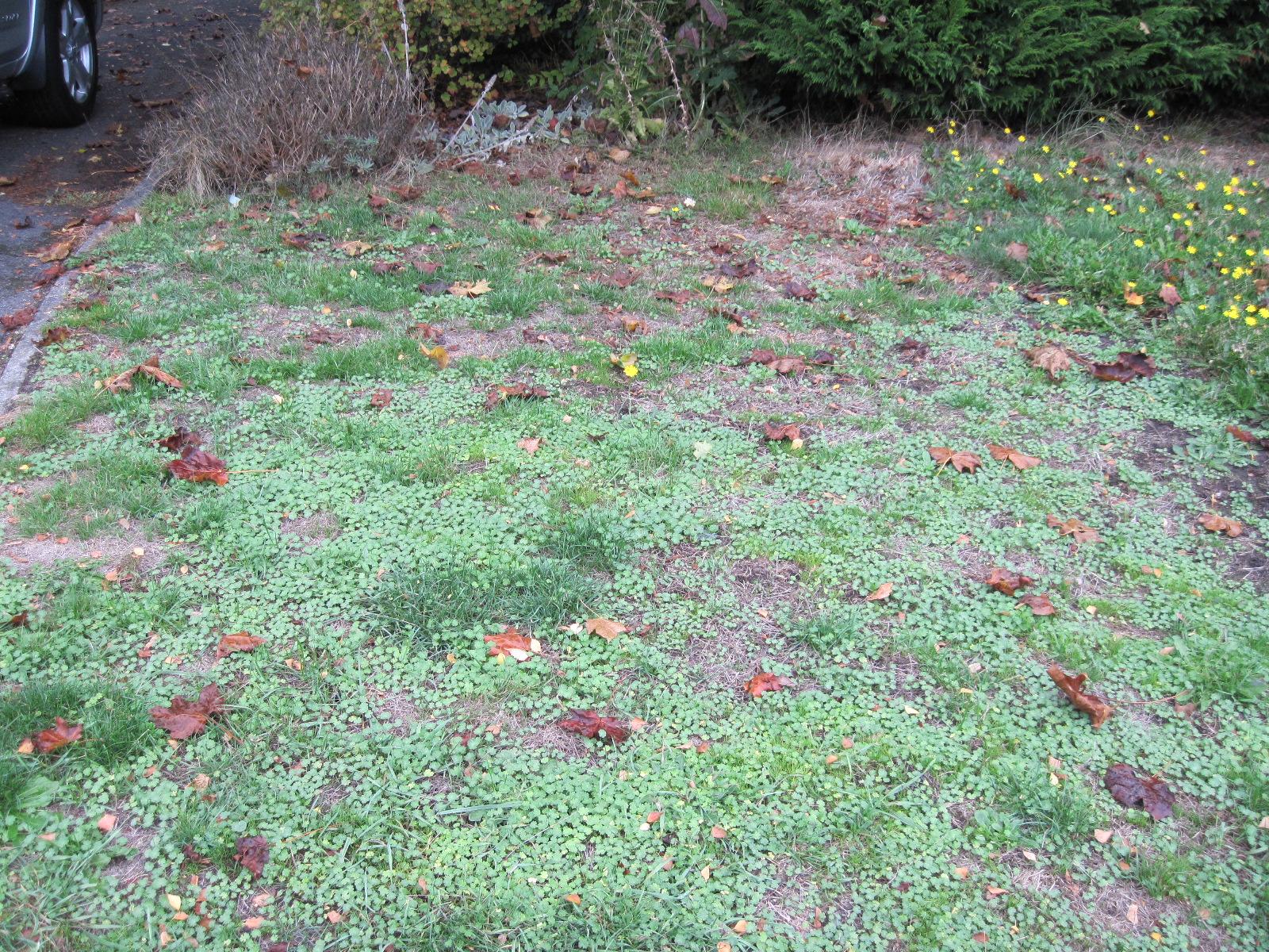 Weeds Audrey Driscolls Blog