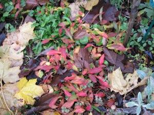 Persicaria foliage