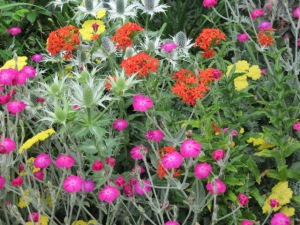 Rose campion (Lychnis coronaria) and other summer blooms.