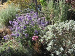 Purple aster, nerines and senecio.