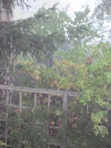 Trellis and witch hazel in fog