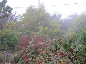 Front garden and neighbouring trees in fog.