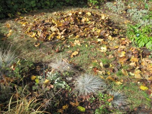 Leaves being assembled on the grass circle among perennial beds.