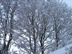 A snow of yesteryear -- not at Christmas, unfortunately, but February 2011.