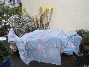 Will the sheet protect the pelargoniums from Jack Frost?