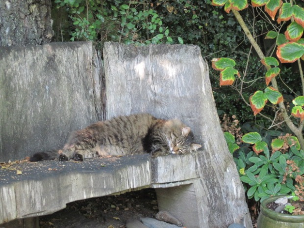 Zeke the Cat sleeping on pond bench,