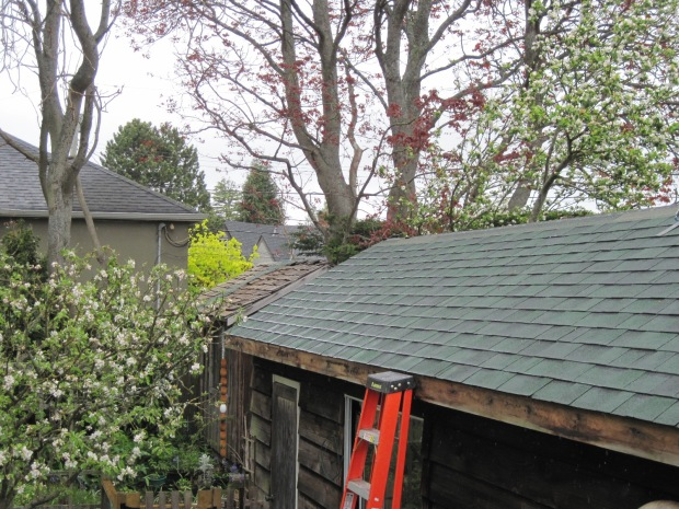 garage roof, shingles, ladder, apple tree in bloom
