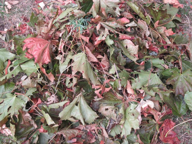 dry leaves, drought