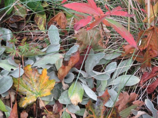 campion, fireweed and mixed fall foliage closeup