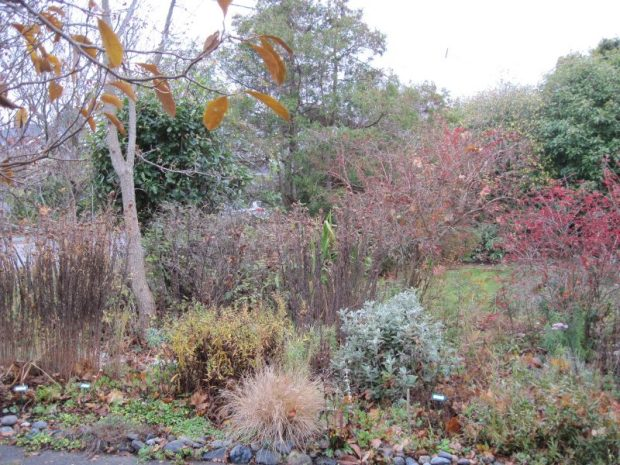 front garden in November, decline, brown