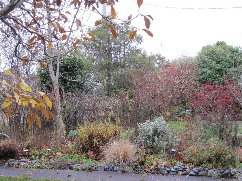 Front garden late November