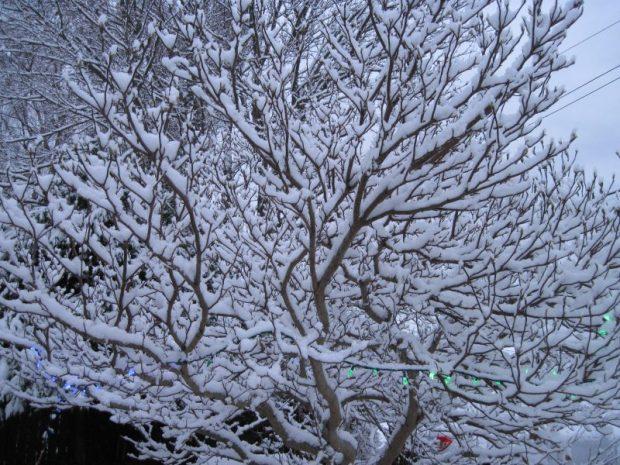 snow, Christmas 2017, magnolia