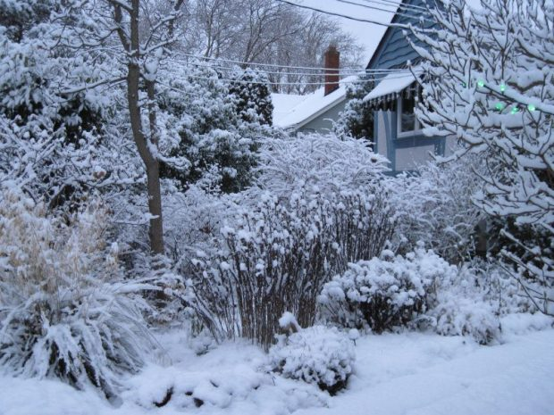 front garden, snow, Christmas 2017