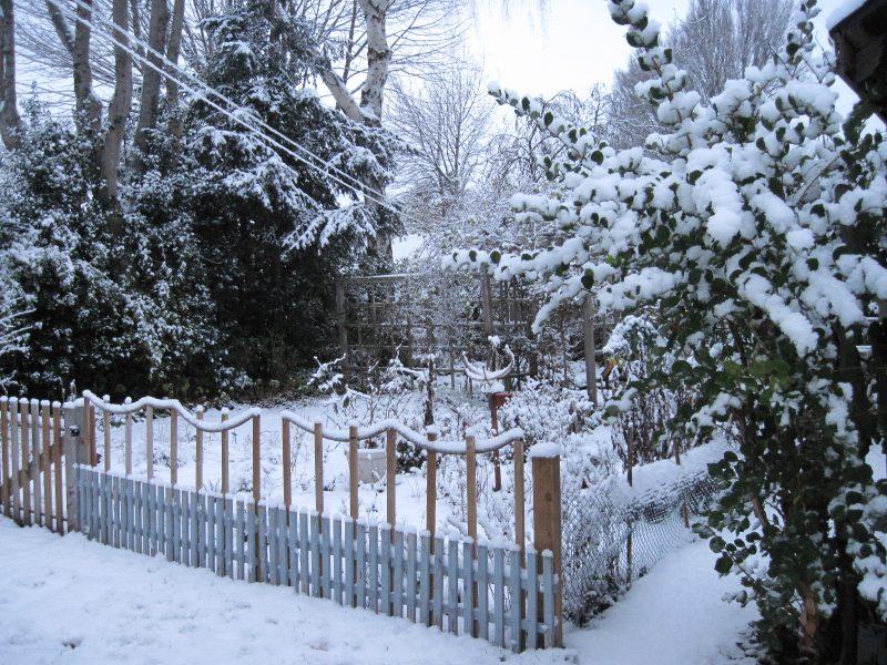 back garden, snow, Christmas 2017