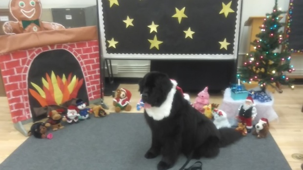 Nelly Newfoundland dog