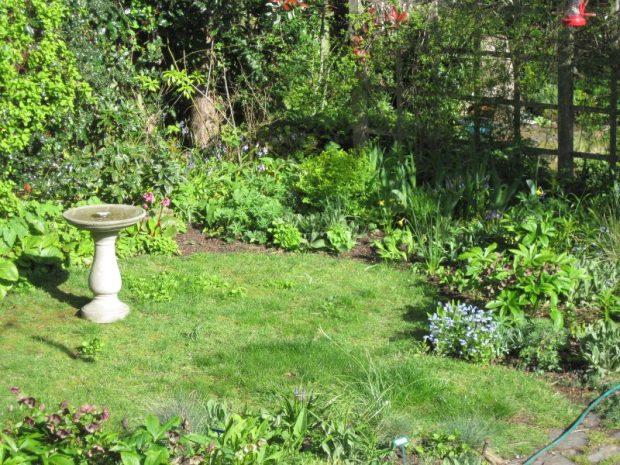 Back garden spring 2018 birthday birdbath