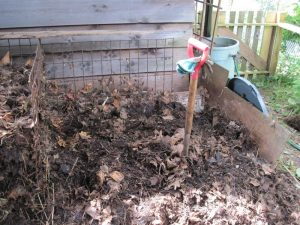 Compost in progress, last fall's leaves