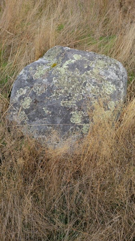 Boulder with lichen near Cattle Point