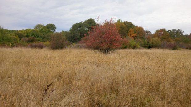 Uplands Park vista