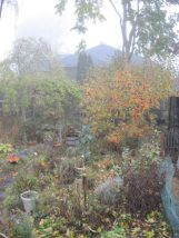 Back garden October 24, 2018 apple tree, yellow, orange and red leaves in fog