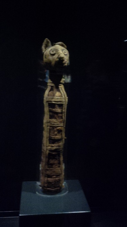 Cat mummy from RBCM Egypt exhibit.