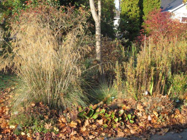 Front garden featuring Stipa gigantea