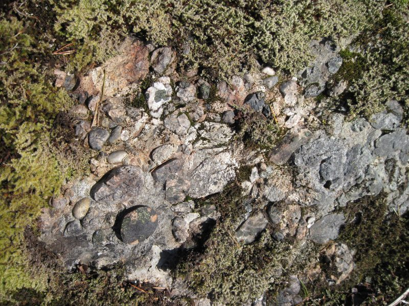 Conglomerate rock and mosses near Mt Erskine, Salt Spring Island, March 5, 2019