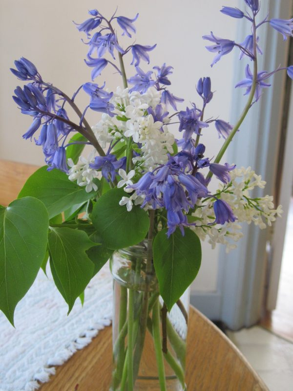 Bluebells and white lilac