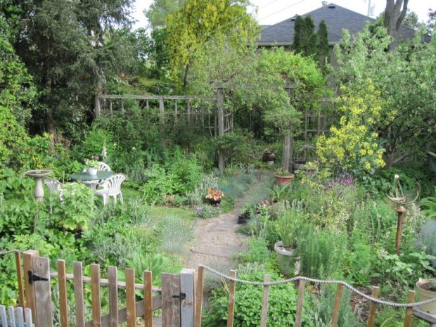 Back garden overview June 2019 with kale tree in bloom