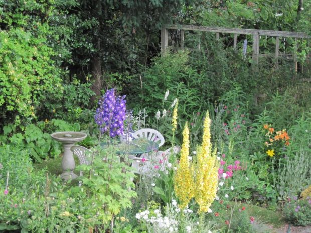 "Back garden perennial beds in June, with Verbascum chaixii, Delphinium, Asiatic lilies, and white campion (Lychnis coronaria ""Alba"") in bloom"