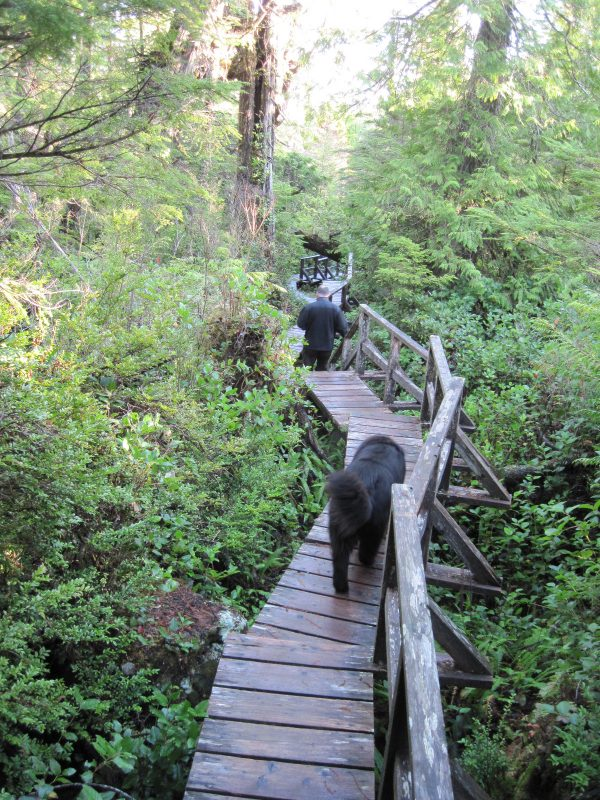 On the boardwalk, Nuu-chah-nulth Trail to Florencia Bay