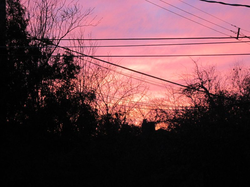 Pink sunset sky with electrical wires and silhouettes of shrubs and trees