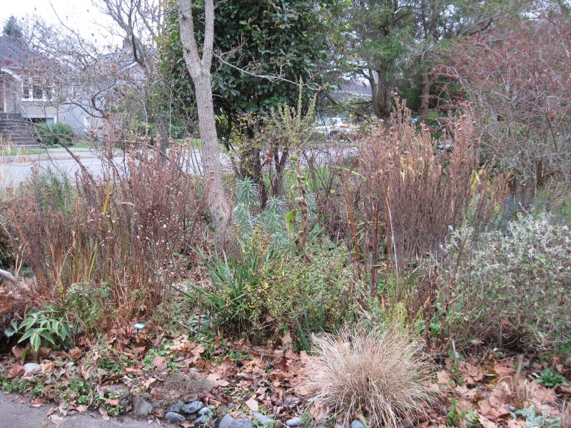 Front garden perennial bed with dead stalks past its best